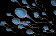 tinh trùng, dịch sinh dục, tinh dịch, mộng tinh, cuasotinhyeu