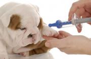 chó cắn, xước chân, tiêm phòng, bắt đầu bỏ ăn, gắt gỏng, viêm da, triệu chứng, dấu hiệu, bệnh dại, chích ngừa, cuasotinhyeu