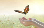 ngoại tình, tha thứ, đau khổ, thời gian, giải thoát, tạo cơ hội, trách nhiệm, cửa sổ tình yêu.
