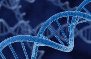 có thai, thai ngoài ý muốn, qhtd, biến đổi gen, giống bố, đặc điểm, di truyền, cuasotinhyeu