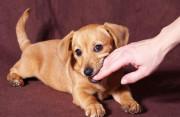 đứt tay,chó, liếm tay, sau 20 ngày, ốm chết, phát bệnh, 10 ngày, tiêm phòng,cuasotinhyeu
