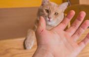 mèo nhà, cắn, cào, virus bệnh dại, mắt đỏ, liệt, chảy nước dãi,7-10 ngày, tiêm phòng, cuasotinhyeu