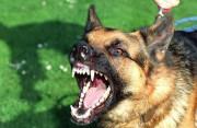 Chó cắn, ở bàn chân, không chảy máu, không đau, ngứa, virus dại , nước bọt, vết thương hở, sốt trên 38 độ C, cuasotinhyeu