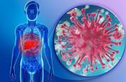 viêm gan b, lấy vợ, sinh con, viêm gan b thể không hoạt động, viêm gan b thể ngủ