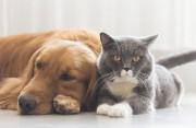 Có cần phải đi tiêm phòng khi bị chó nhà cắn hay không ?