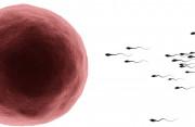 Kích thước trứng 13 mm thì bao lâu sẽ xảy ra sự rụng trứng ?