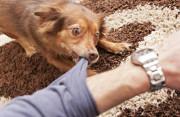 Có nên đi tiêm phòng dại khi chẳng may bị chó nhà cắn?