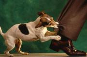 """Vết chó cắn chỉ như """"đọng máu"""" trong da có nên tiêm phòng???"""
