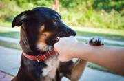 Chó chết ngay sau khi ngậm vào ngón chân, liệu có bị dại???