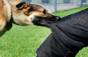 Bị chó cắn sau tiêm phòng dại 1 tháng có cần tiêm ngừa lại?