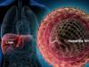 viêm gan B, ảnh hưởng, xét nghiệm, men gan,cuasotinhyeu