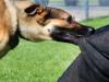 chó nhà nuôi, tiêm phòng, cắn liếm, rửa bằng nước sạch, tiêm vaccine, chó dại, cuasotinhyeu
