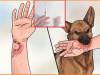 chó nhà nuôi, virus dại, tiêm phòng, vết thướng hở, nước bọt, cuasotinhyeu